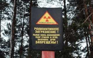 Запрещен сбор грибов