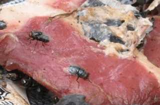 Протухшее мясо
