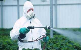 Обработка пестицыдами
