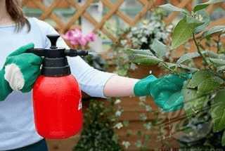 Обработка растений удобрением