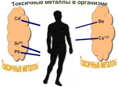 Металлы попавшие в организм