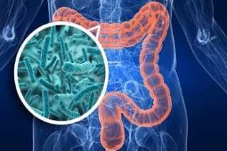 Бактерии или токсины в кишечнике