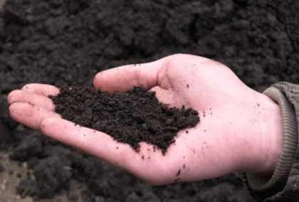 Споры ботулизма в почве