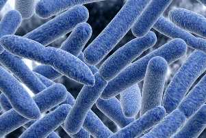Клостридии ботулинум под микроскопом