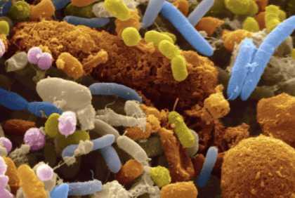 Разнообразие бактерий