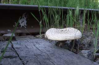 Грибы у железной дороги