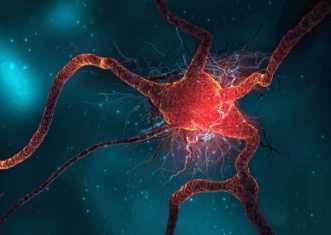 Ботулотоксин поражает нервные клетки