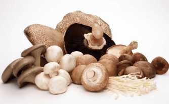 Протеин в грибах