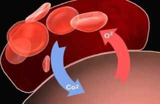 Обмен газов в крови