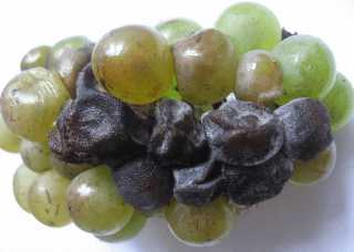 Подпорченный виноград