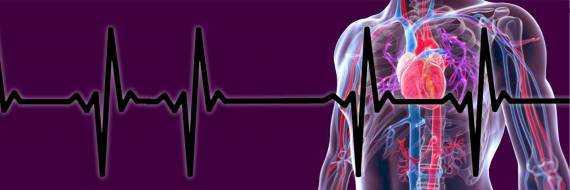 Мерцательная аритмия сердца – симптомы, лечение, причины