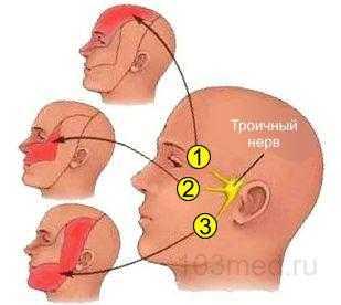За что отвечает троичный нерв