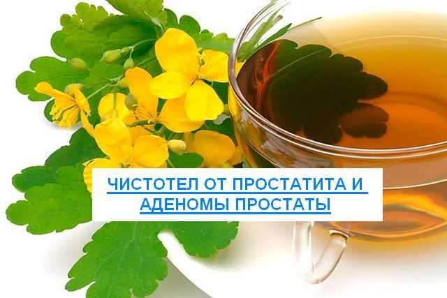 Лечение простатита и аденомы простаты чистотелом