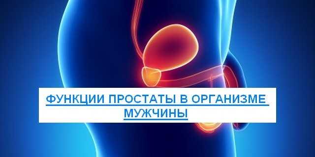 функции простаты в организме мужчины